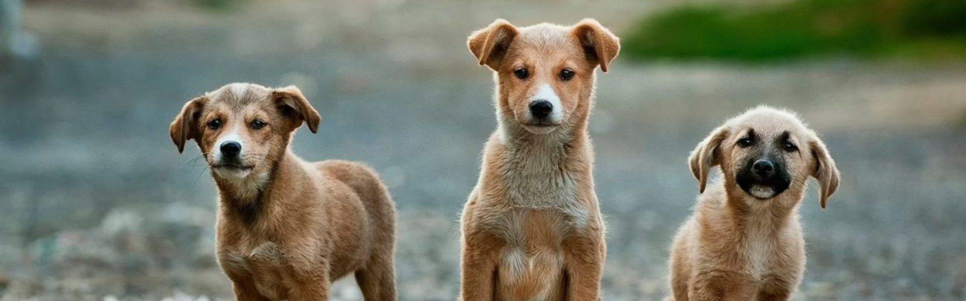 Hundehaftpflicht-Preisvergleich